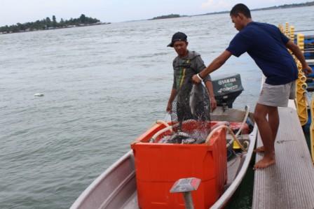 Haruskah Ikan Diawetkan Portal Agribisnis Indonesia
