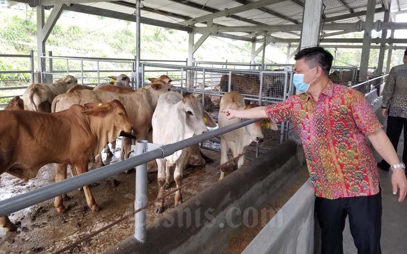Pt Japfa Comfeed Indonesia Tbk Fasilitasi Akses Kredit Bca Ke 12 Peternak Sapi Portal Agribisnis Indonesia